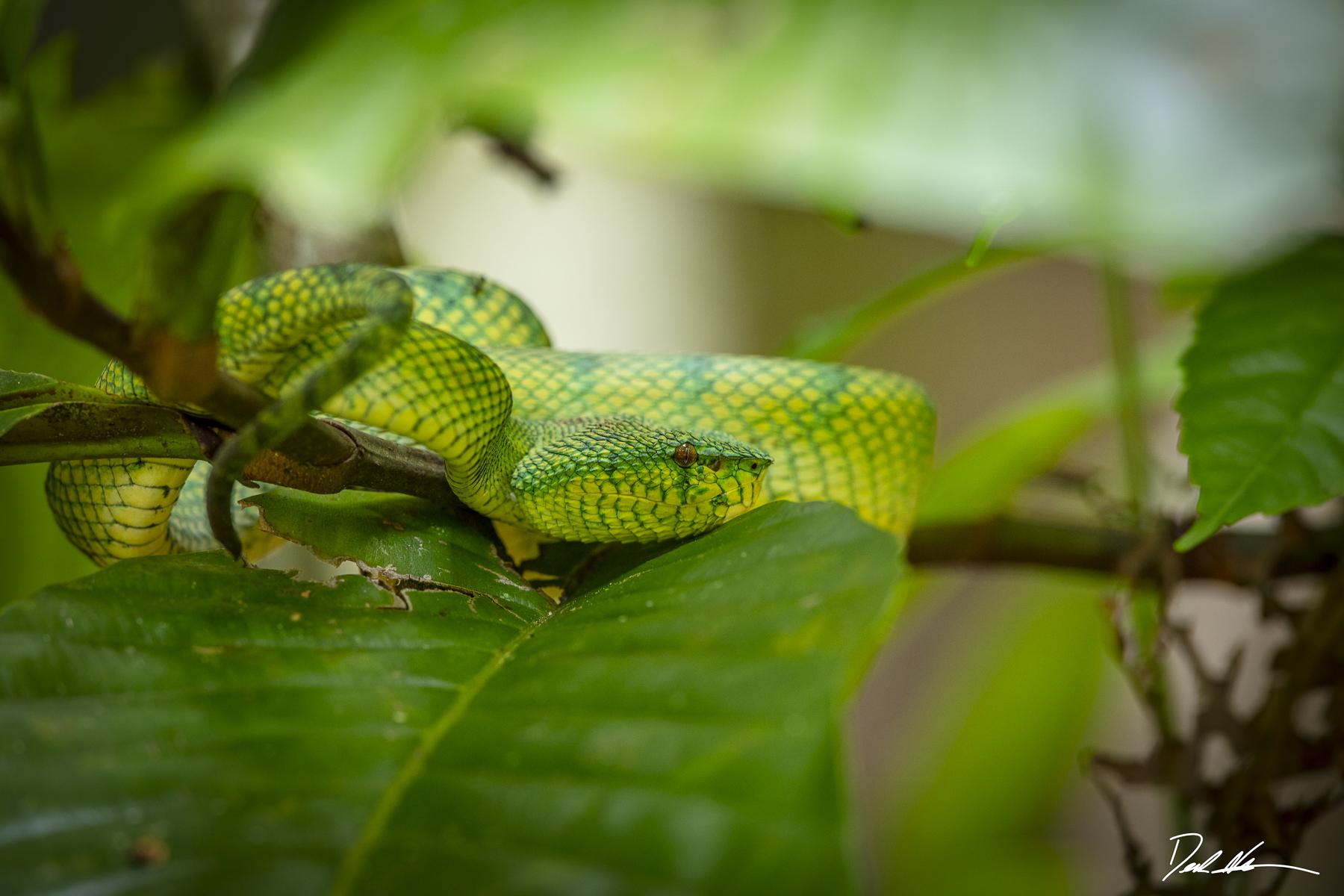 snake in borneo jungle
