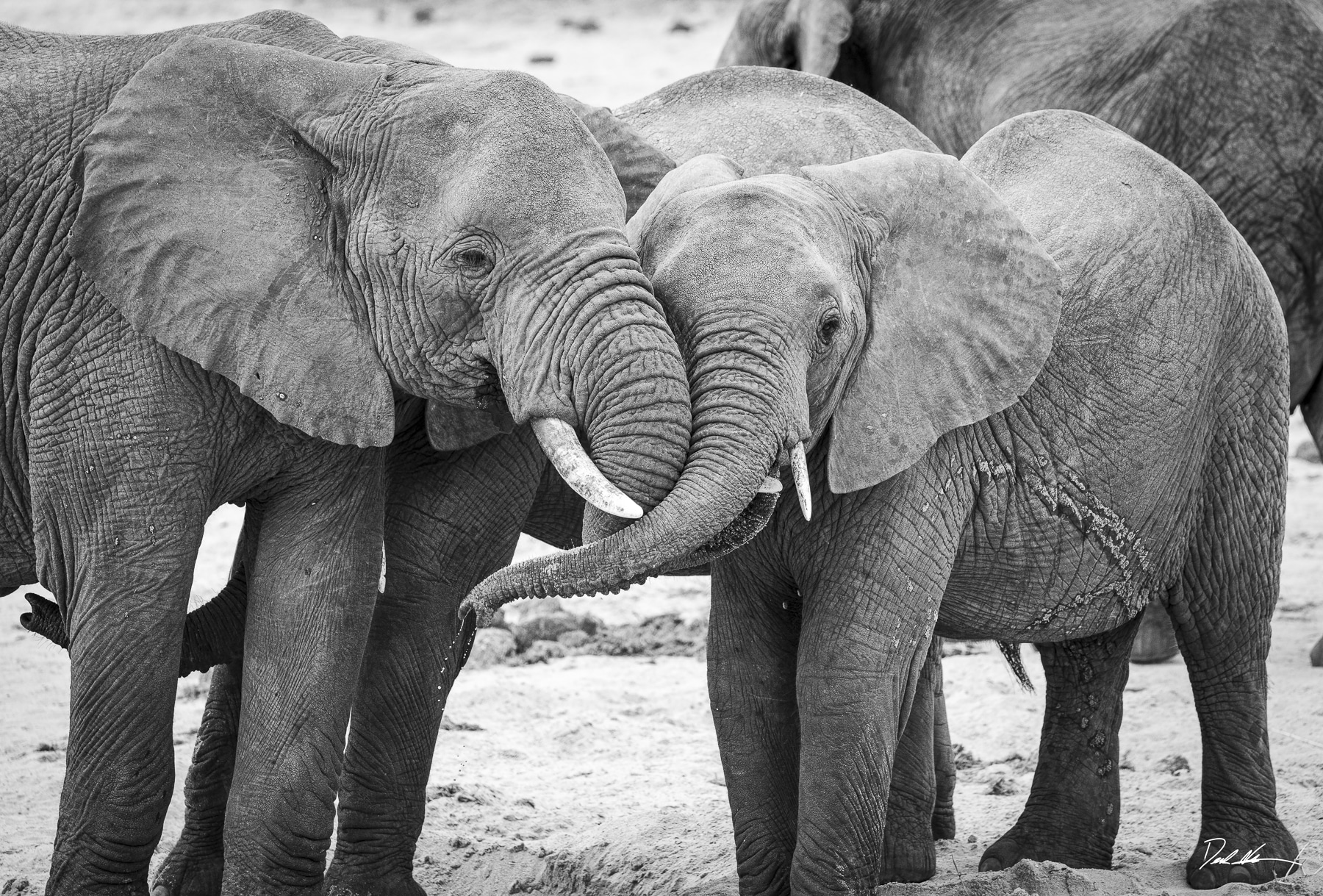 elephant hug in tanzania