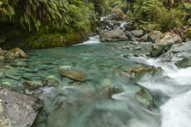 River in New Zealand forest