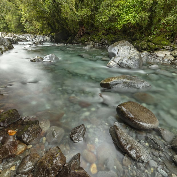 New Zealand river in forest