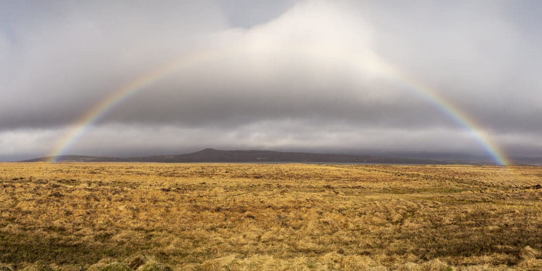 Rainbow in Iceland over golden field