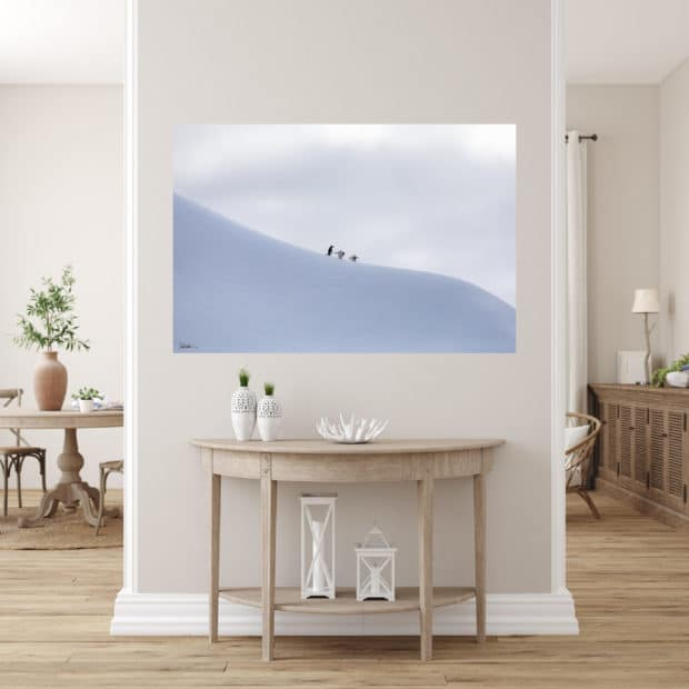 photo of 3 penguins on large iceberg in Antarctica displayed in living room of modern luxury home