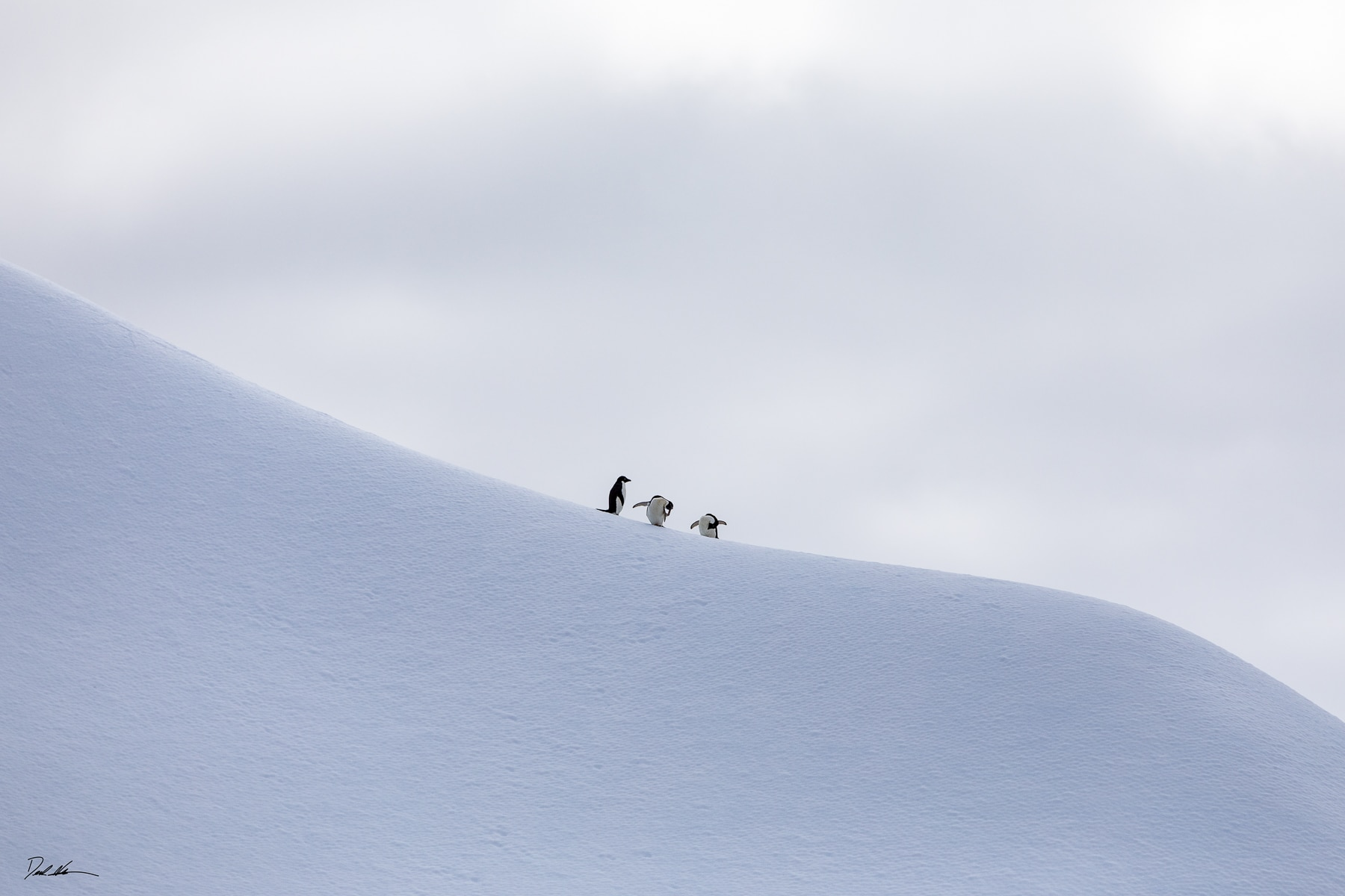 3 penguins in the distance