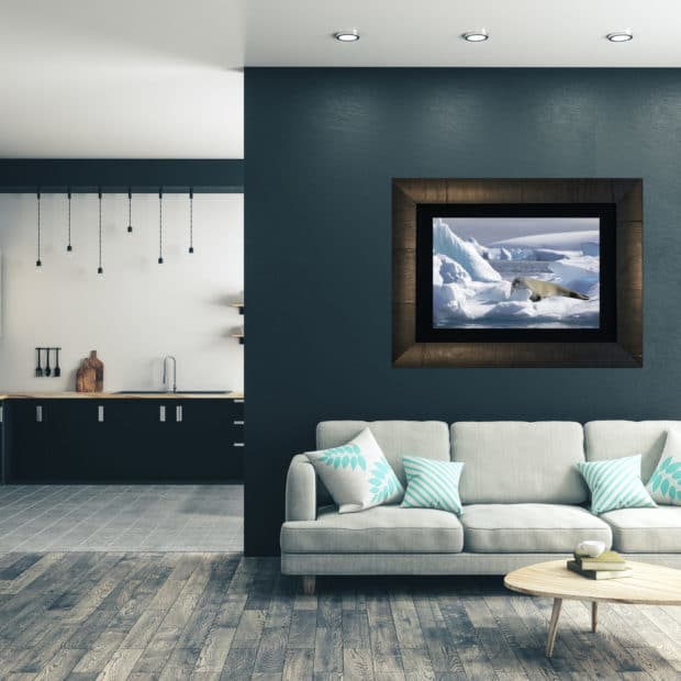 framed photo of seal resting on ice displayed in living room of modern luxury home