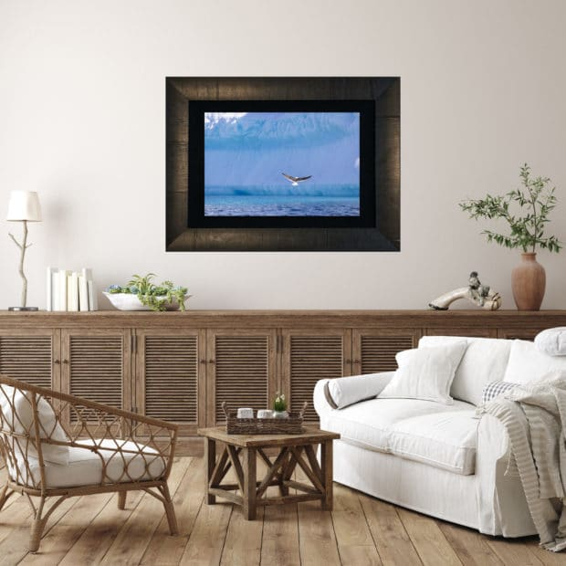 framed photo of bird landing in front of an iceberg in Antarctica displayed in living room of modern luxury home