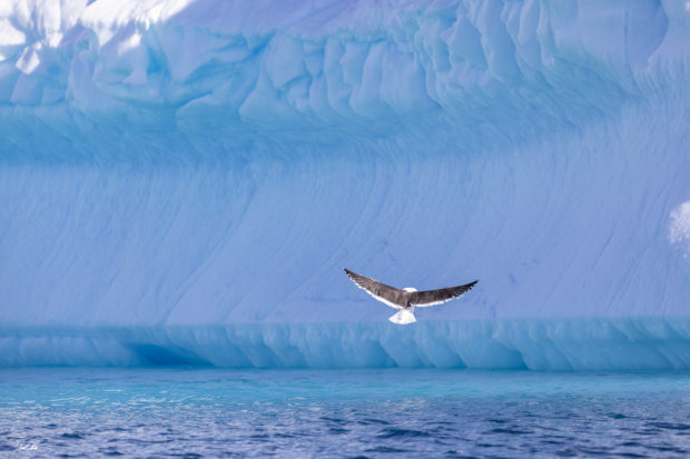 Bird in Antarctica