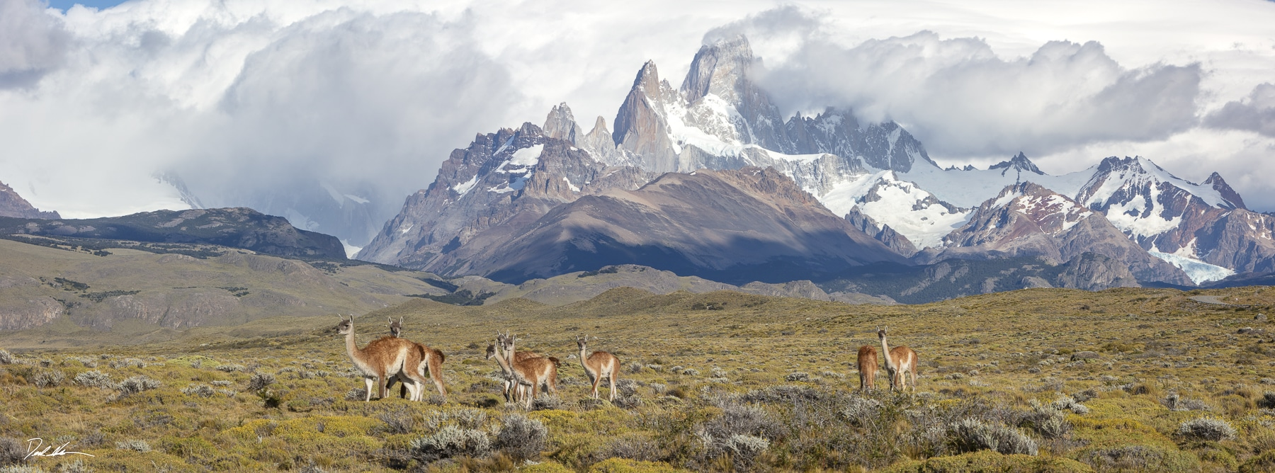 wildlife crossing in front of Mount Fitz Roy Patagonia