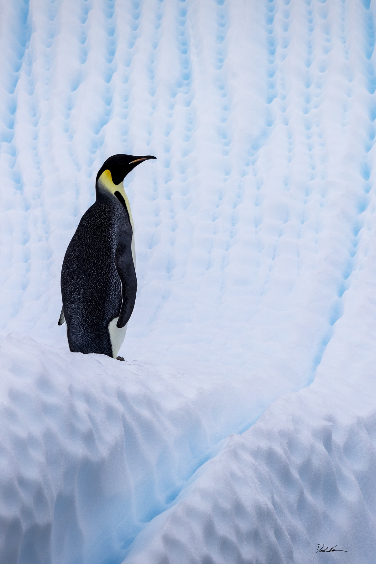 Emperor penguin on interesting iceberg
