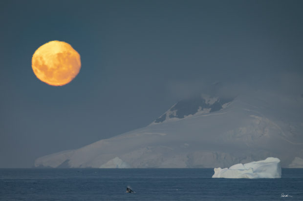 full moon rising over mountain with whale jumping in Antarctica
