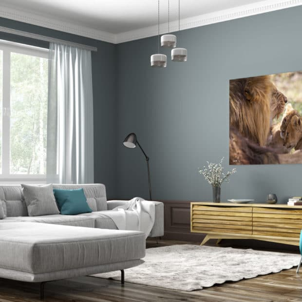 large fine art print of baby lions investigating fathers mouth displayed in modern stylish luxury home