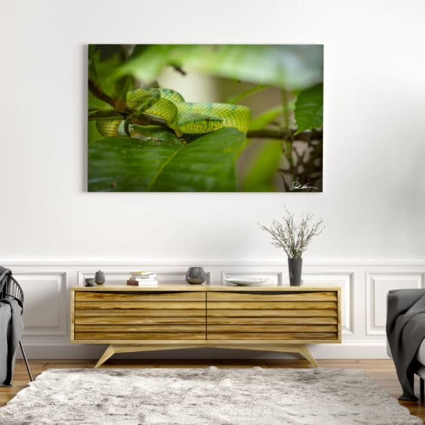 colorful photo of green snake in borneo displayed in modern stylish luxury home