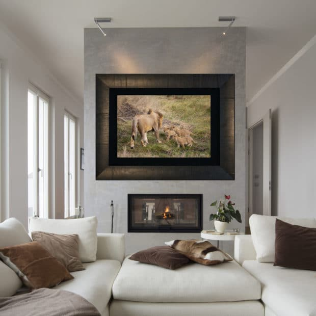 framed large fine art print of baby Linos approaching large male lion displayed in modern stylish luxury home