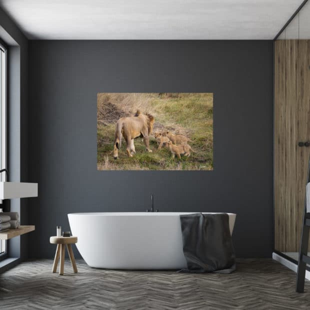 large fine art print of baby lions walking up to large male lion displayed in modern stylish luxury home