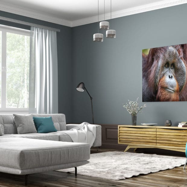 large fine art print of large male orangutan displayed in modern stylish luxury home