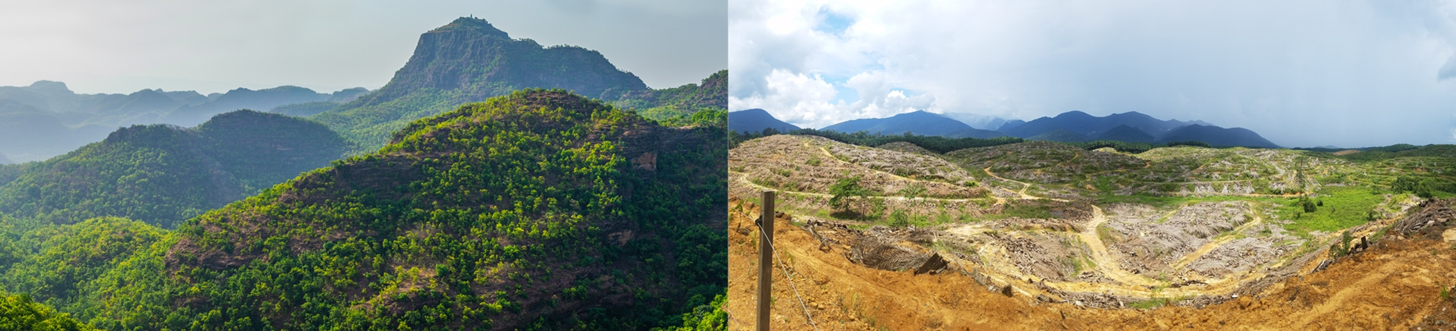 comparison of forest and deforested land