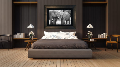 framed black and white fine art photo of two elephants displayed in modern stylish luxury home