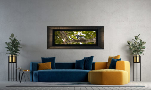 framed large photo of hornbill bird in borneo tree canopy displayed in modern stylish luxury home