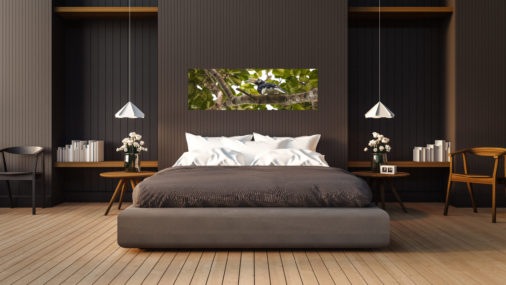Large photo of hornbill in borneo tree canopy displayed in modern stylish luxury home