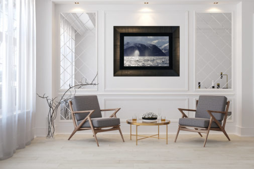 large framed photo of two humpback whales displayed in modern stylish luxury home