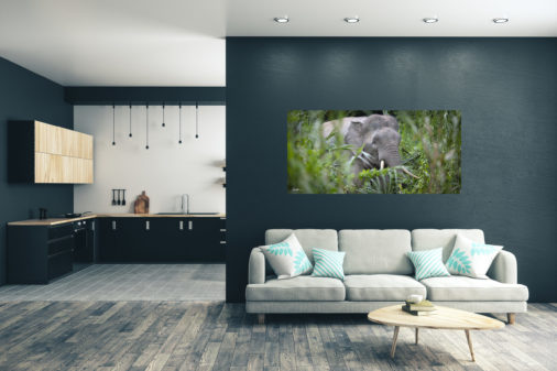 large photo of bornean elephant walking through tall grasses along a river displayed in modern stylish luxury home