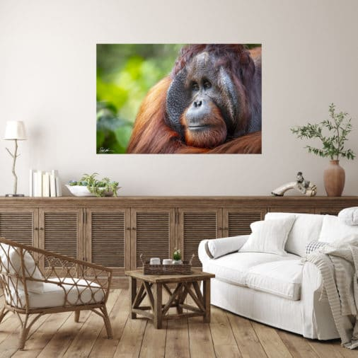 colorful photo of large male orangutan displayed in modern stylish luxury home