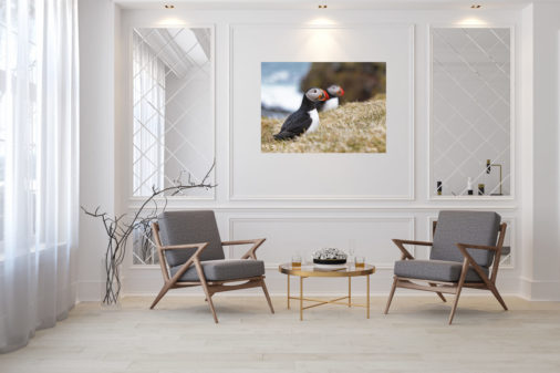 photo of puffin on hill displayed in modern stylish luxury home