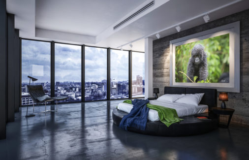 framed photo of baby gorilla displayed in luxury apartment