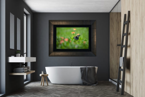 framed photo of butterfly in Borneo hanging in bathroom above bathtub of luxury home