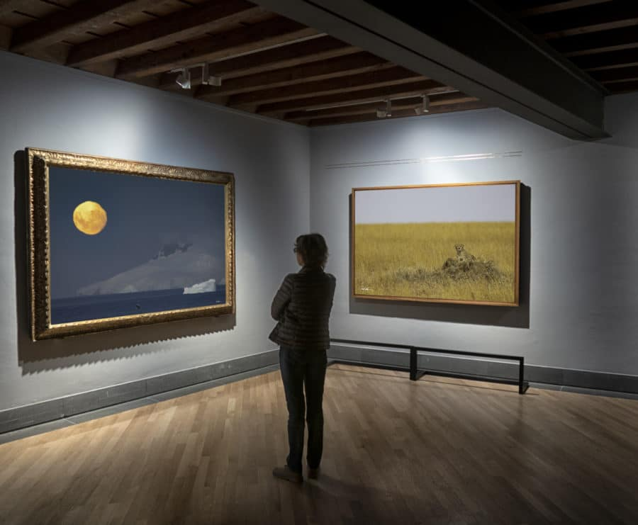 a woman relaxing in an art gallery observing two large photographs of nature