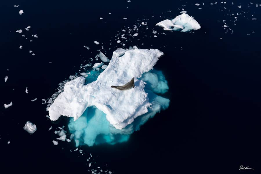 image of a solo seal on a melting iceberg in Antarctica