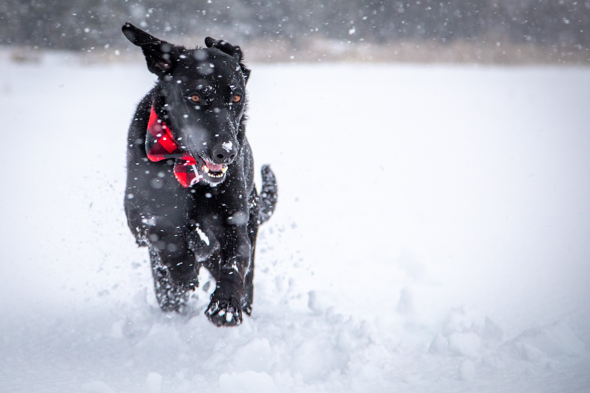 Photograph of dog running in the snow