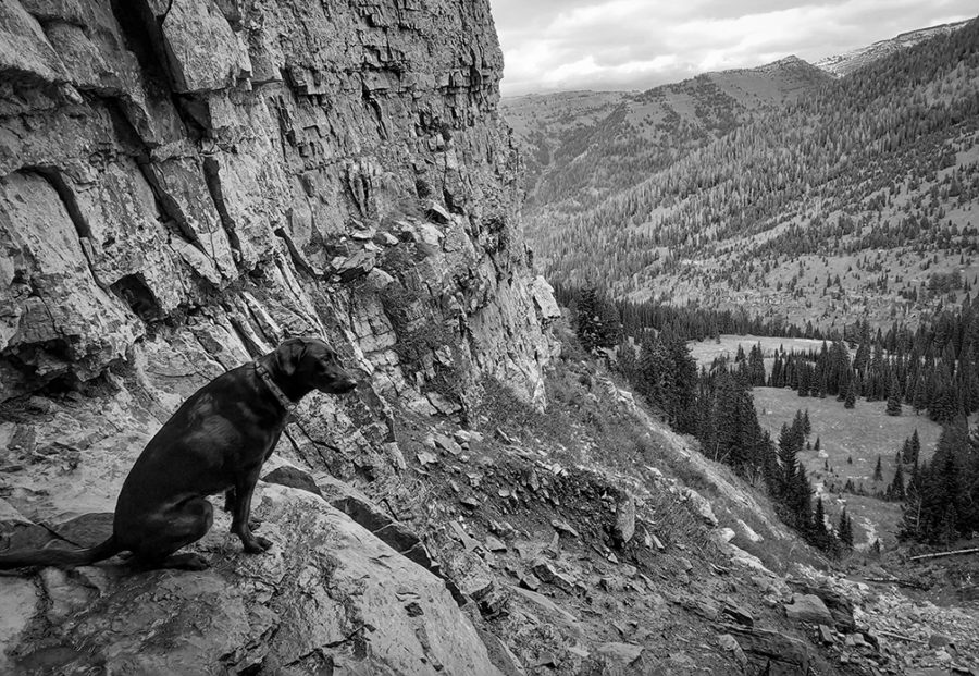 Black and white photograph of dog in the mountains