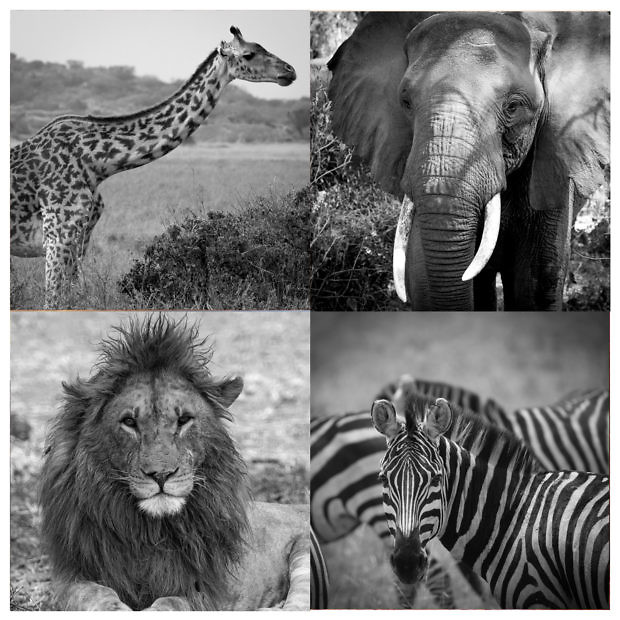 Group of black and white images of wildlife in Africa