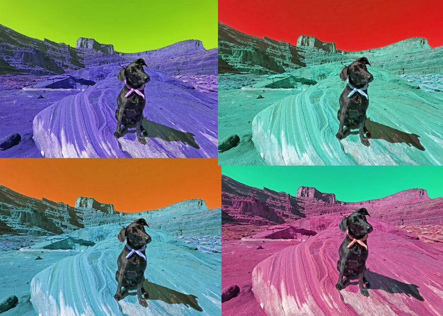 multi color photo of dog adjusted for hue and saturation