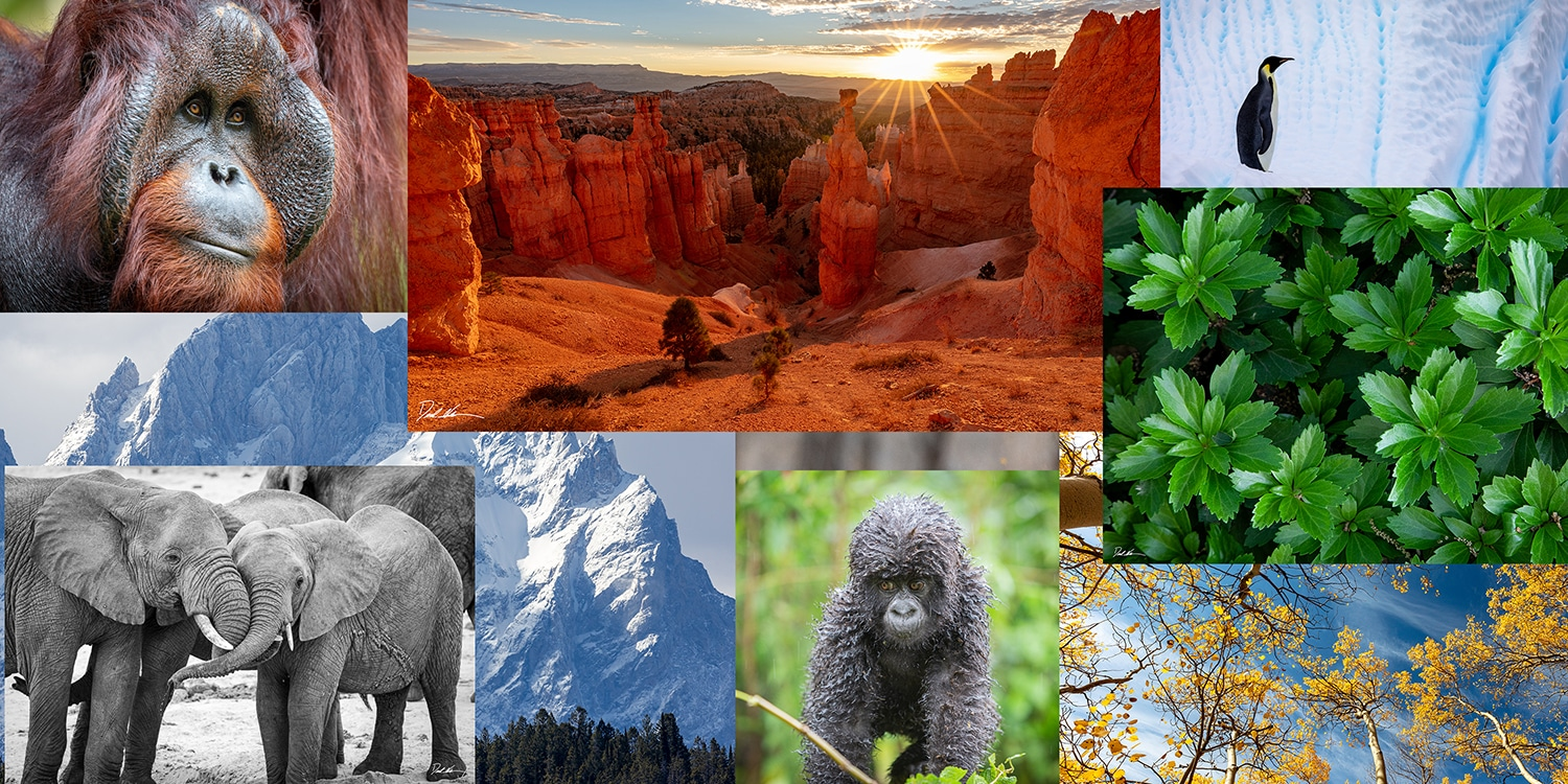 images of multiple nature scenes in a collage